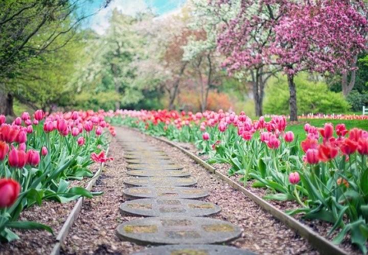 ingilizce çiçek bitki ağaç isimleri