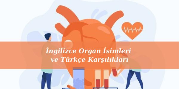 İngilizce Organ İsimleri ve Türkçe Karşılıkları