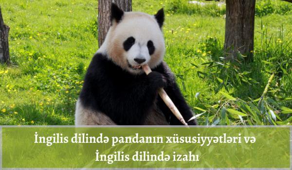 İngilis dilində pandanın xüsusiyyətləri və pandanın İngilis dilində izahı