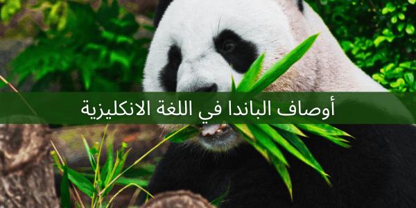 اوصاف الباندا في اللغة الانكليزية