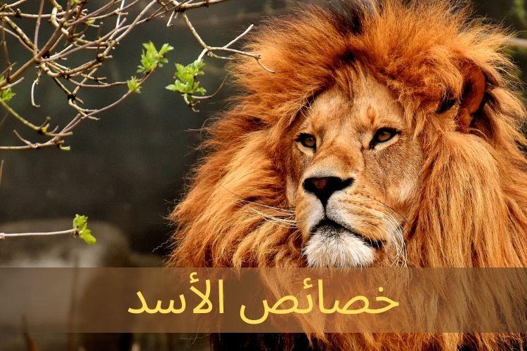 خصائص الأسد باللغة الإنجليزية يتحدث Wordly