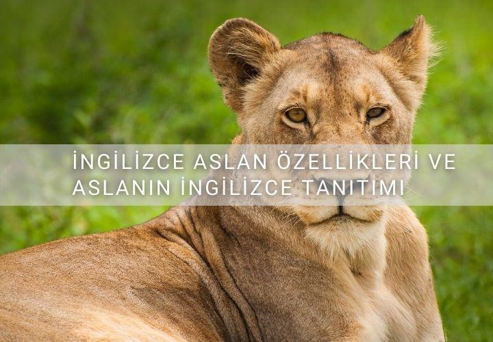 İngilizce Aslan