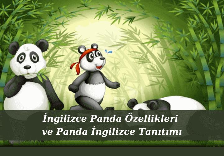 İngilizce Panda Özellikleri ve Panda İngilizce Tanıtımı